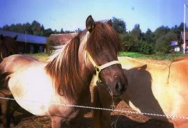 Ridning på Älvstorps hästgård